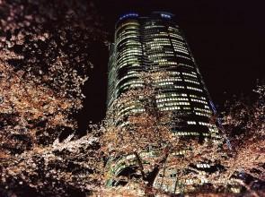 Tokyo Cherry Blossoms 2016